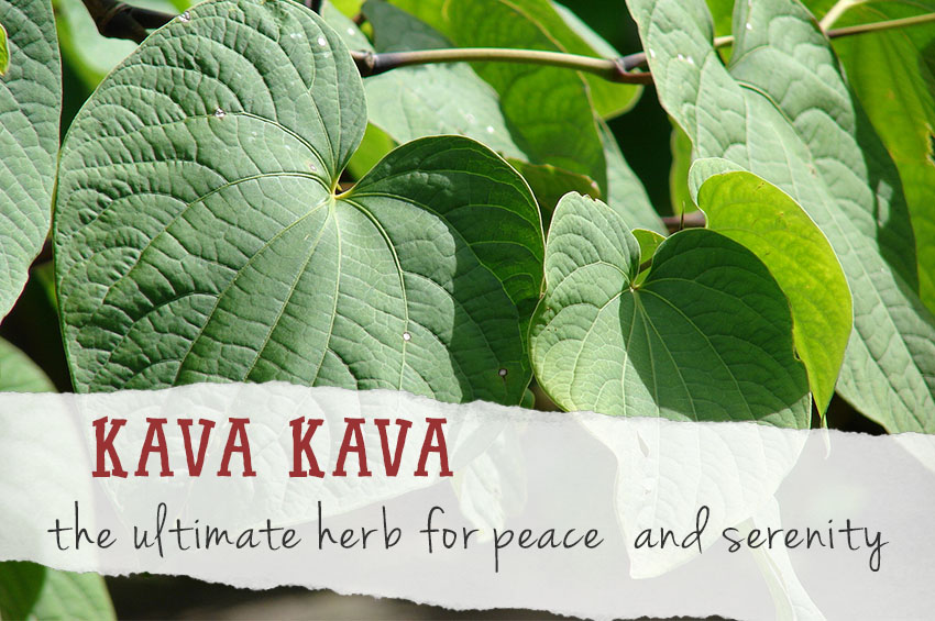 Kava Kava - a healing herb for peace during crazy times